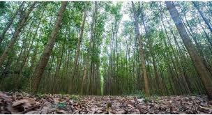 Đăng ký thế chấp rừng sản xuất là rừng trồng.sblaw