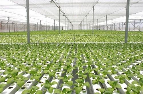 Những thủ tục để được mua đất mở trang trại trồng rau sạch tại Việt Nam-sblaw