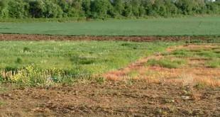 Đền bù đất nông nghiệp khi bị Nhà nước thu hồi - internet